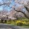 Middlebury Japan Web